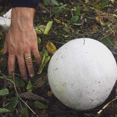"A ""Puffball"" mushroom, about the size of a volleyball."